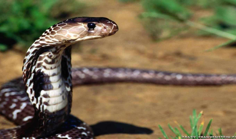 snake, змеи, змей,
