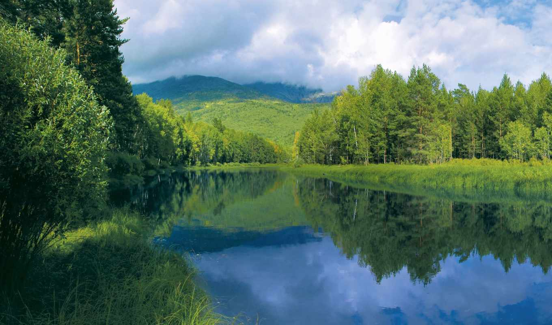 природа, trees, water, гладь, берег, река, интересные, фона, лес, озеро, summer,