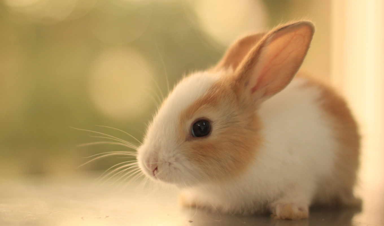 cute, bunny, bunnies, кролик, baby, you, pictures,