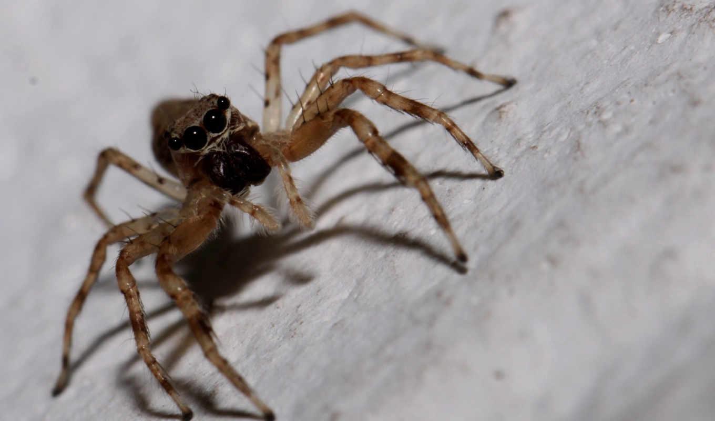 spider,