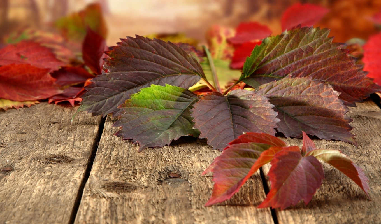 you, this, природа, autumn, листья, доски, theme, рисунки, flag, фотографии, that, are, want, item, sure, популярные,