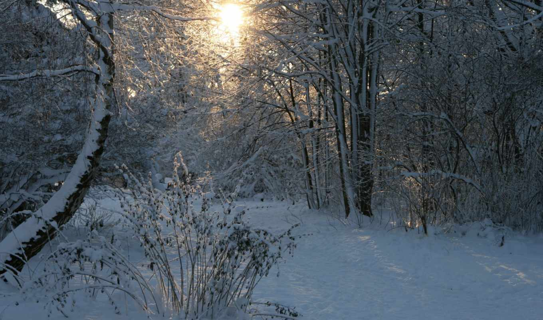 зима, снег, лес, солнце, деревья,