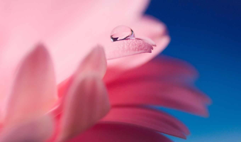цветы, роса, drop, resolution, mobile, фото, фон, качество