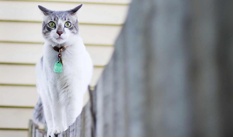 кошки, кот, марта, собака, разных,