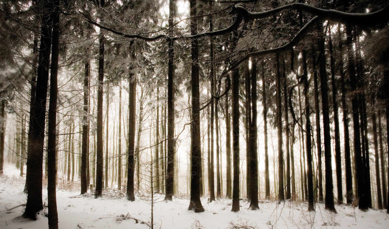 winter, снег, лес, live, дек,