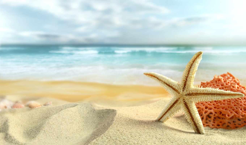 море, summer, пляж, starfish, пляжа, discover, полном, размере, природа, создать,