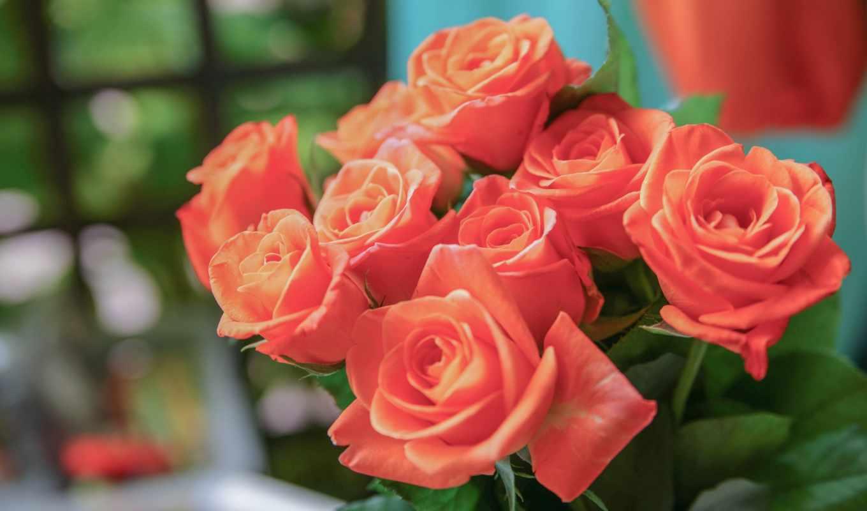 цветы, марта, широкоформатные, сайте,