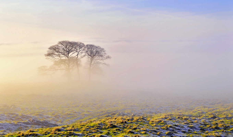 mist, поле, утро, деревя, дерево, февр,