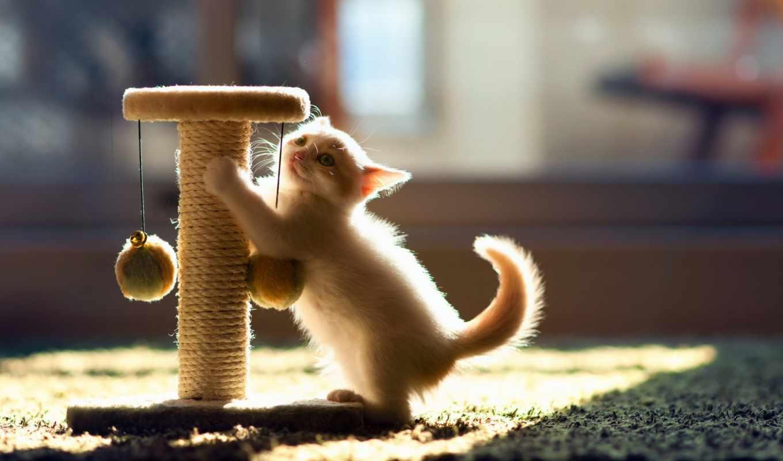 том, еще, she, кошки, котенка, кота, кошку, когтеточке, приучить,