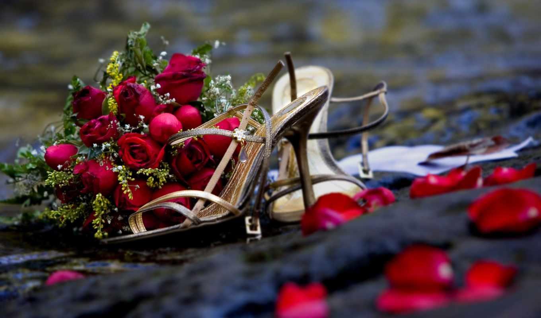 цветы, розы, букет, макро