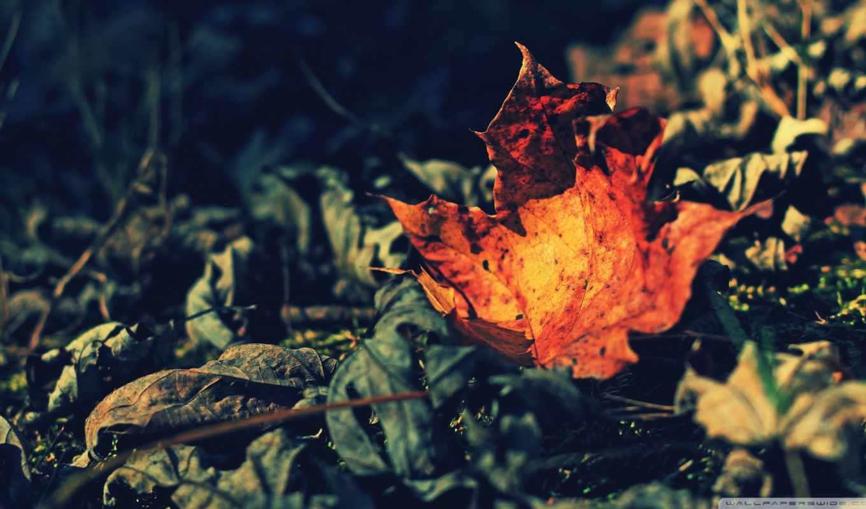 макро, лист, красивые, осень, листва, бесплатные, сухая,
