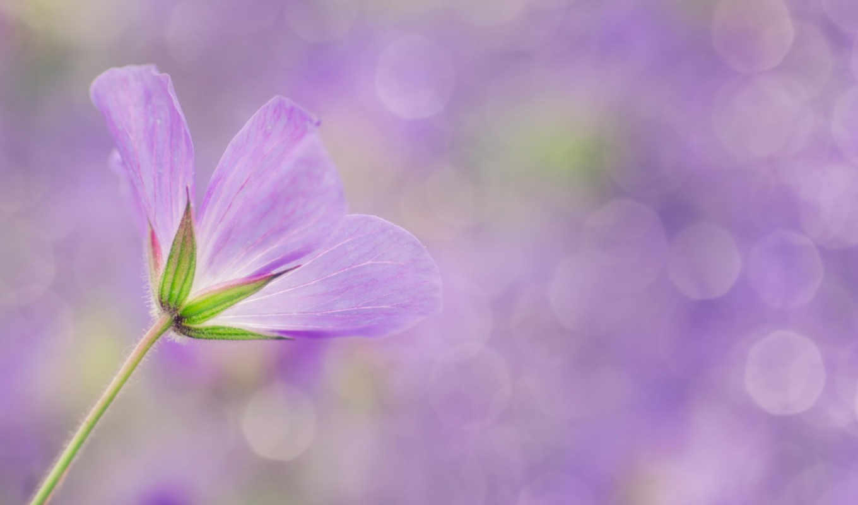 stock, free, abstrakt, violetta, gratis, photos, rgbstock, foto,