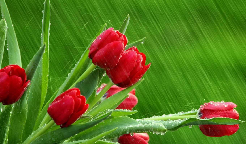 поздравления, поздравляю, день, martha, если, поздравляем, мар, труда, победы, кб,