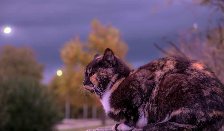 кот, domestic, animal, doghouse, public, domain, фото, pet, feline, собака, порода