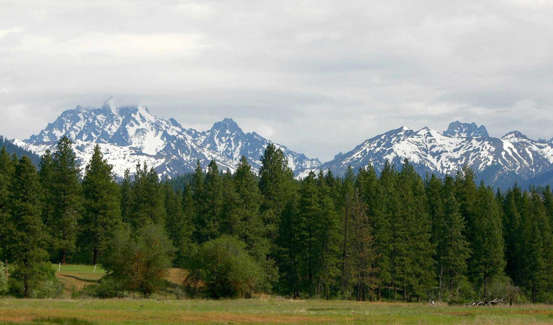 and, wallpaper, trees, pine, mountains, горы, download, сосны, wallpapers, desktop,