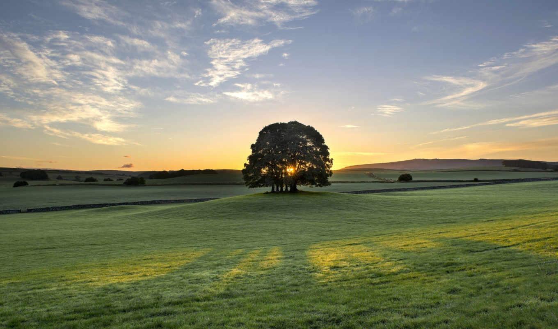 bell, дерево, англия, восход, утро, busk, рассвет, природа,