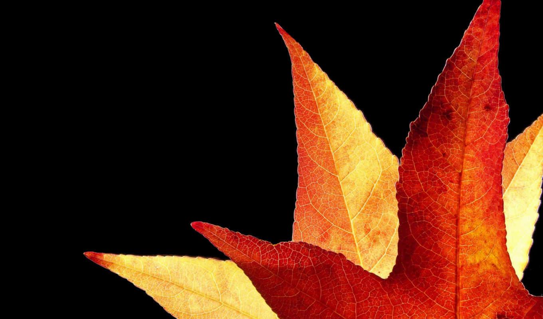 nature, лист, осень, desktop, золотистый, an, duesseldorf, leaves, germany, backlit, photos, download, daily, ambertree, картинка, pack, pics, eu,