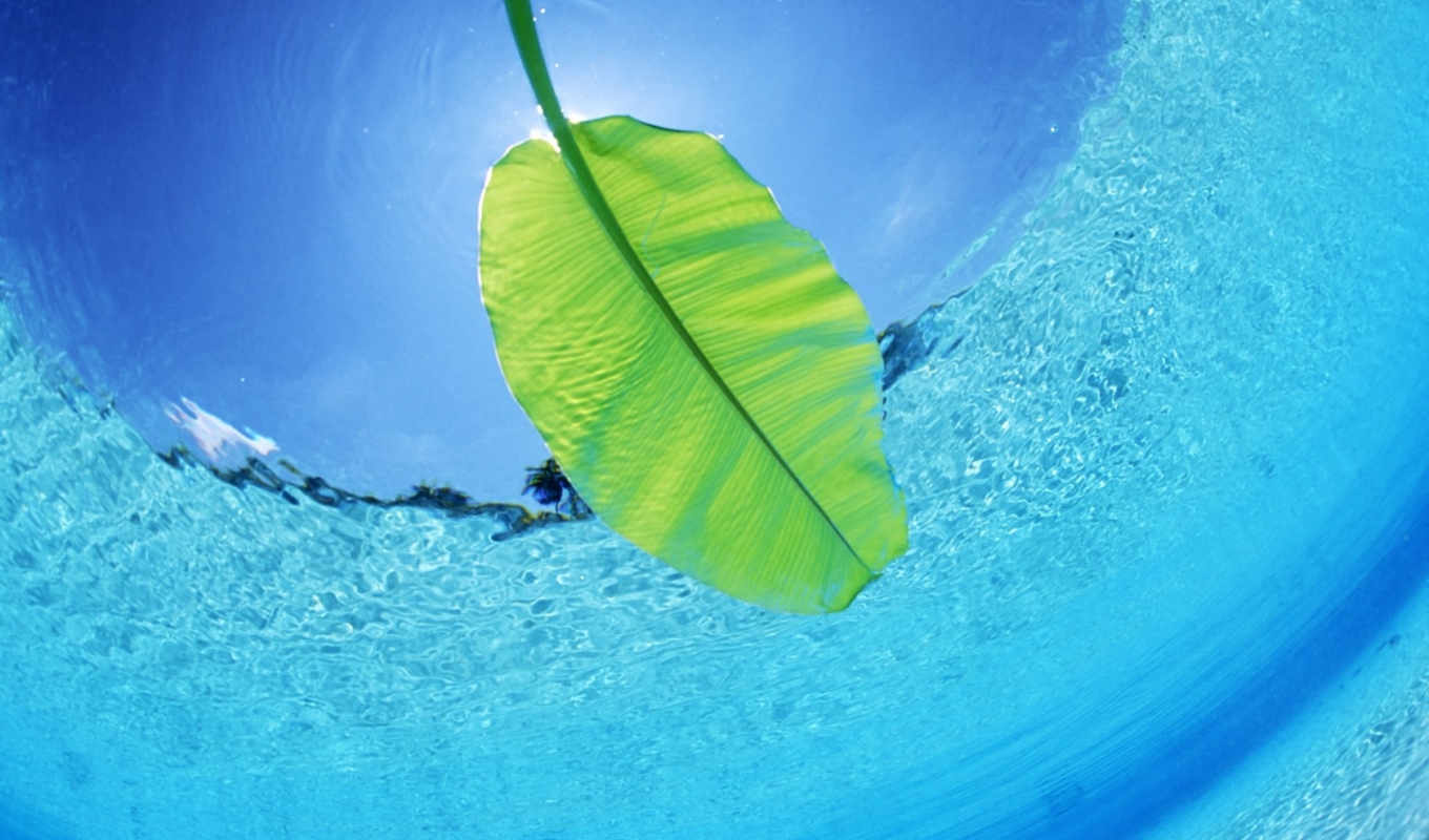 maldives, sea, underwater, water, leaf, island, nature, ъцә, travel, tourism, photos,