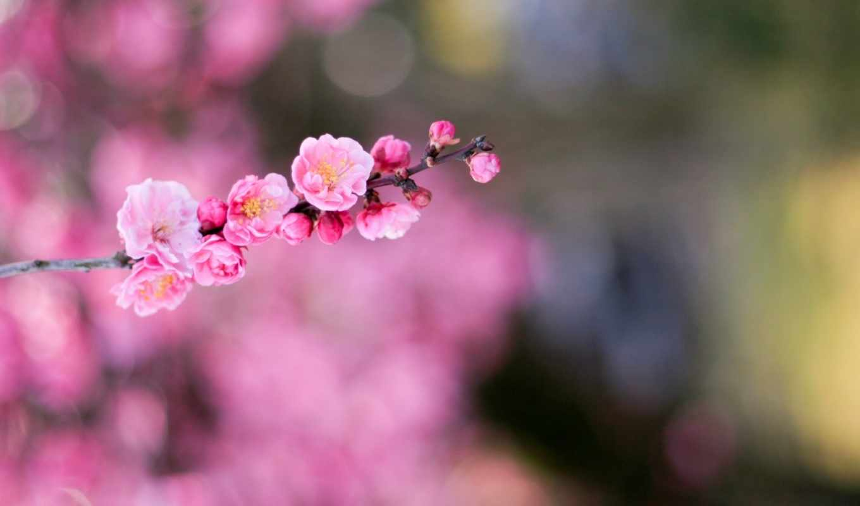 flowers, макро, possible, категория, resolution, цветы, desktop, кб,