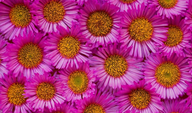 cvety,