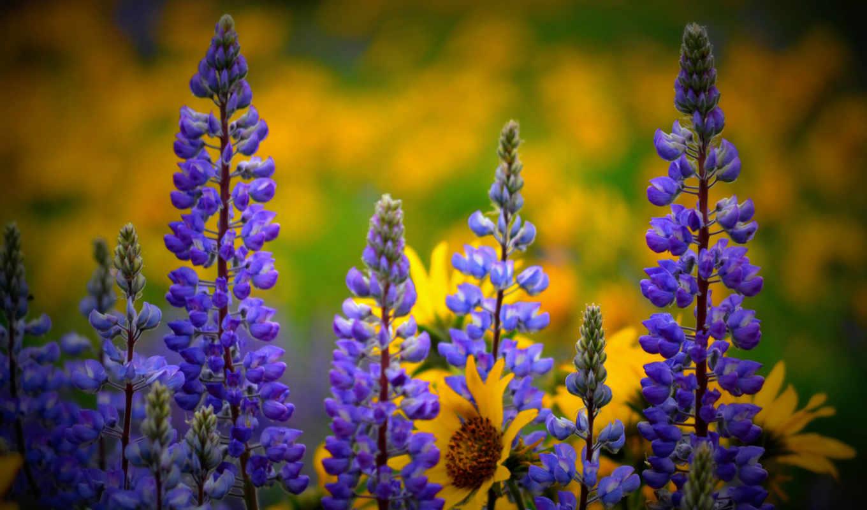 цветы, flowers, категория,