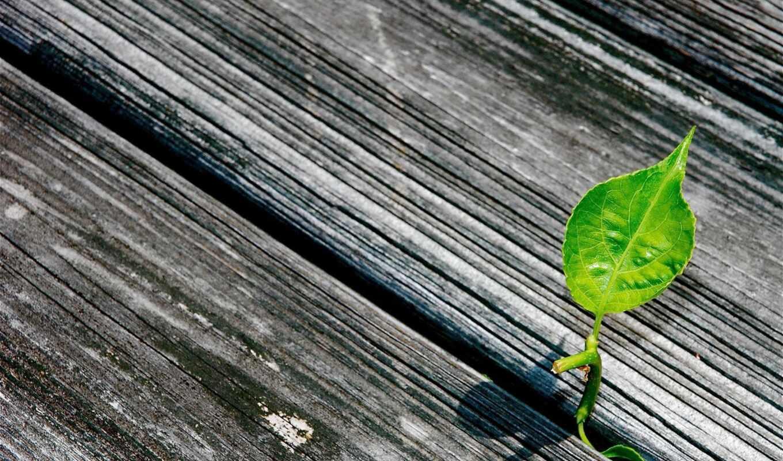 текстура, wallpapersafari, wood, simple