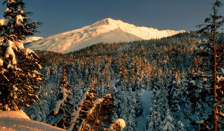 лес, горы, деревья, снег, природа,