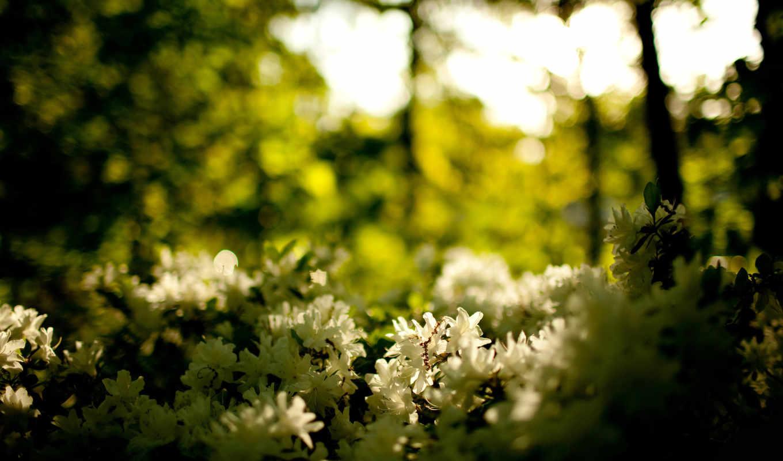 цветы, природа, макро,