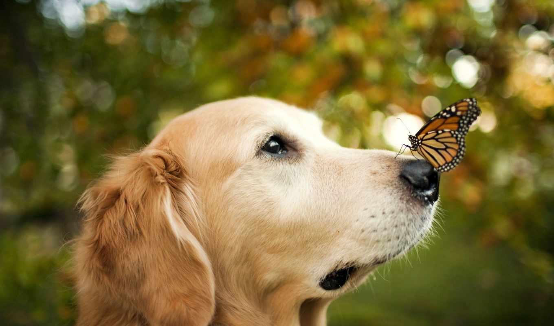 собака, собаки, природе, собак,