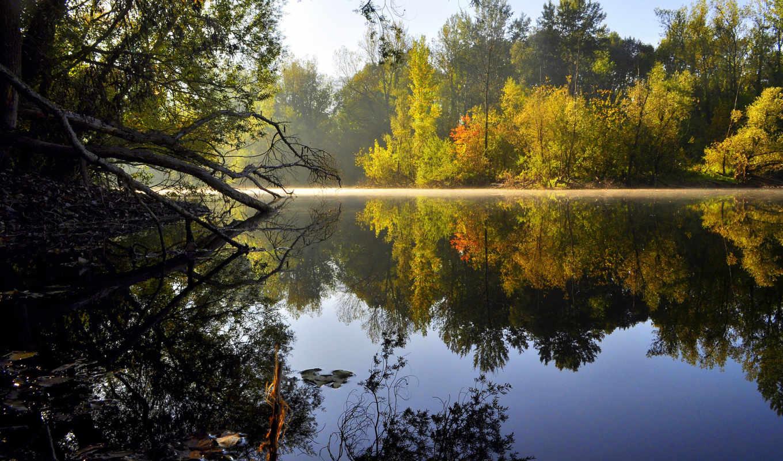 природа, озеро, деревя, отражение, water,вода,