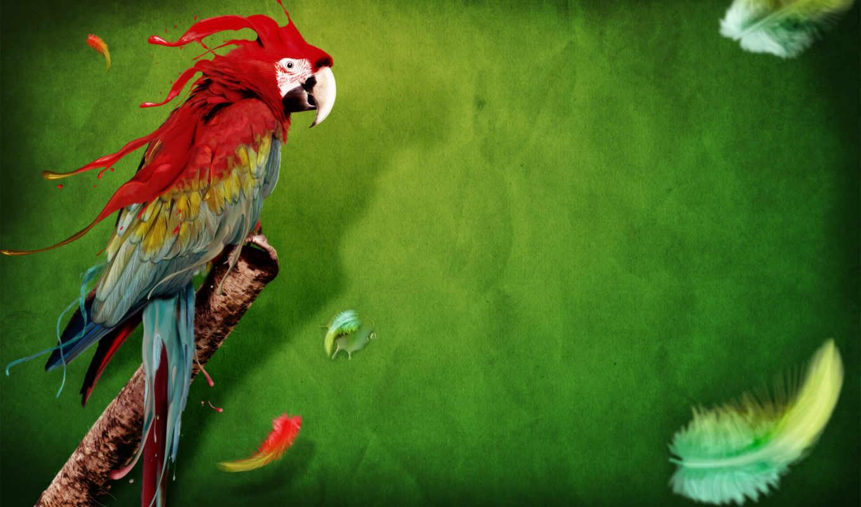 попугай, птица, ara, перья, рисунок, попугая, zhivotnye,