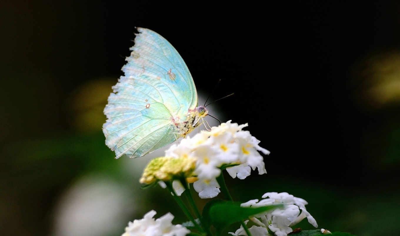 best, pack, макро, крылья, бабочка, цветок, белый,