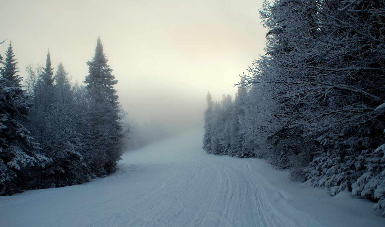 туман, ели, зима, снег, картинка,