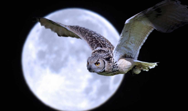 луна, сова, ночь, птица,