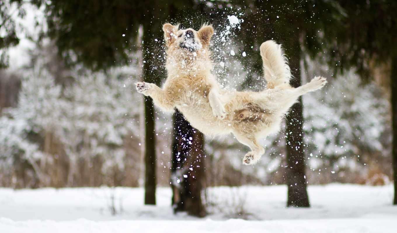 you, игры, снег, собака, dogs,