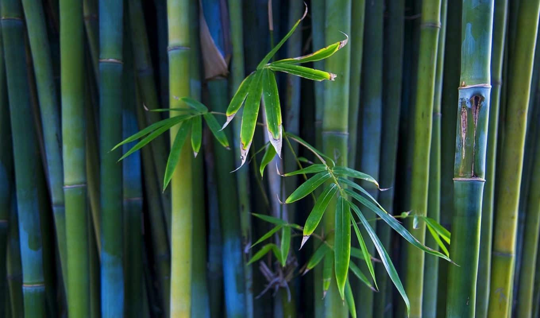 стволы, растение, природа, листья,