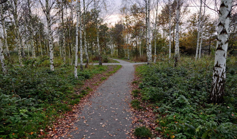 share, без, регистрации, деревья, природа, лес, листья, июня, дек, сегодня, трава, кусты,
