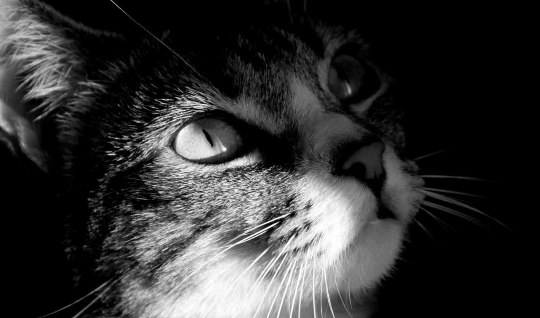 кошки, kartinka, zhivotnye, домашние, от,
