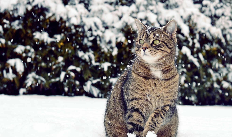 winter, кот, снег, смотреть,