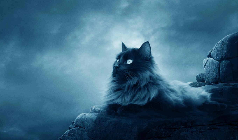 кот, cats, показать, full, кошки,