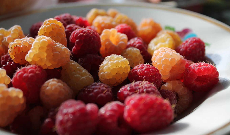 малина, который, вино, ягода, параметры, садовод, сорт, напиток