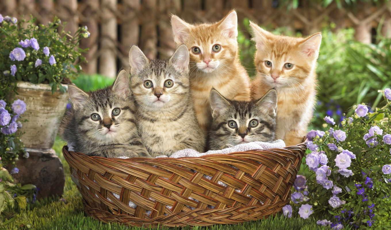 котята, кошки, животные, коты,
