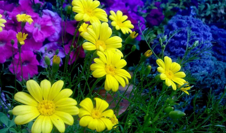 cvety, colorful, клумба, flowers, цветы, совершенно, категория,