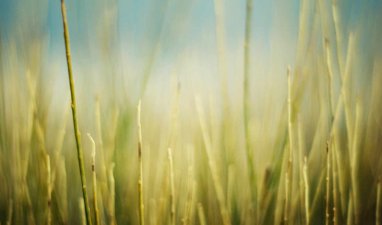 макро, природа, обработка, растения, трава, картинка, поле,