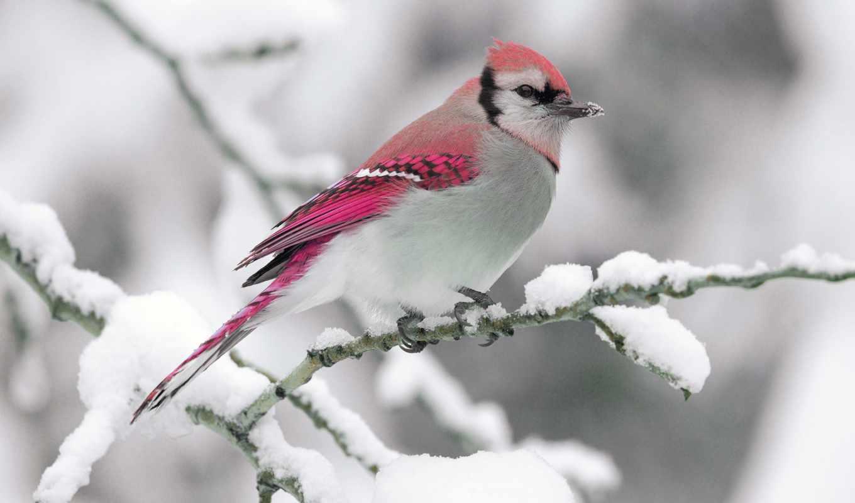 birds, snow, cute, desktop, animals, views, bird, animal, jay, blue,