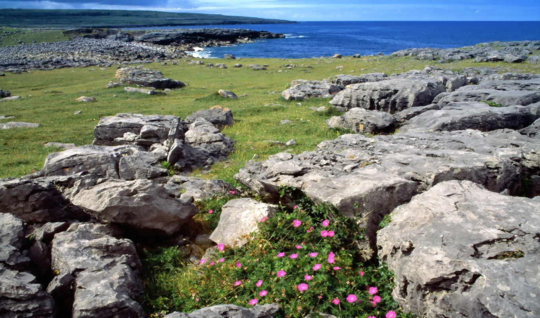 ireland, красивый, природа, подборка, цветы,