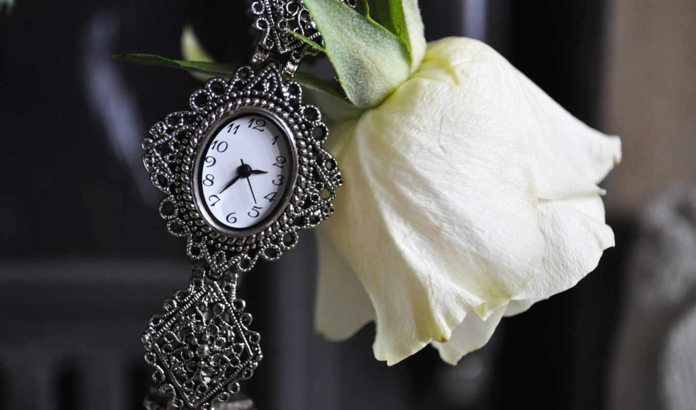 роза, white, часы, розы, you, свадебных, ромашки, resolution, цветы,