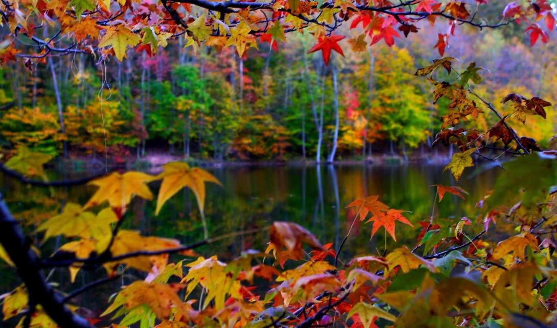 осень, природа, листва, landscape, макро, trees,