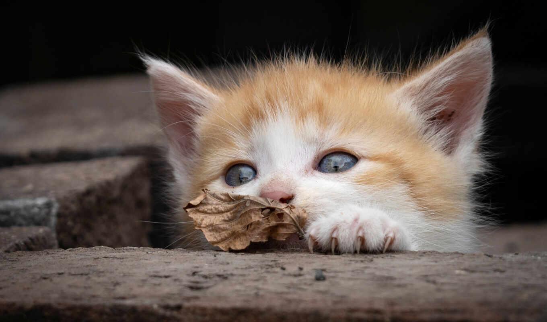 кот, animal