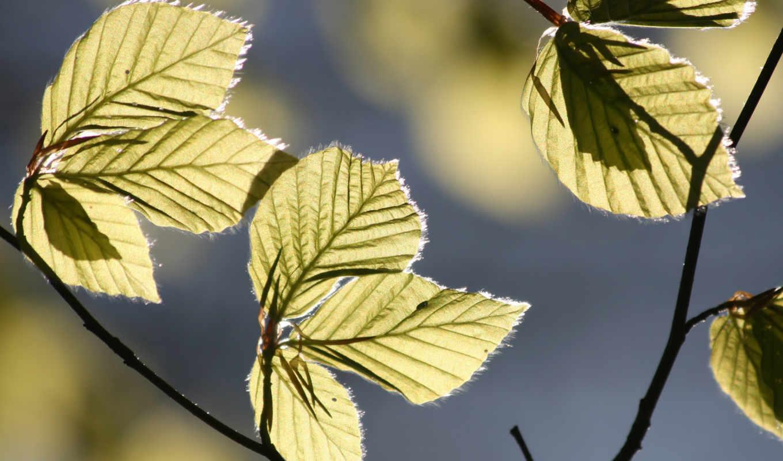 sunlight, leaves, tree, comment,